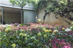 花园景观房
