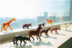 Animal Kingdom Family Room