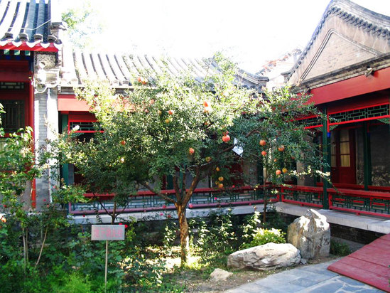 前院石榴树