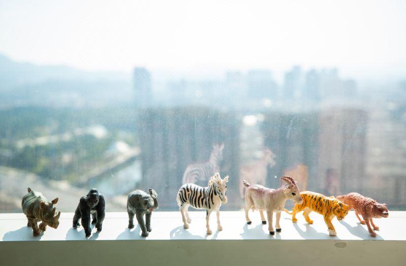 動物王國親子房